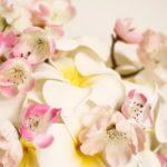 bouquet frangipani e fiori di giliegio